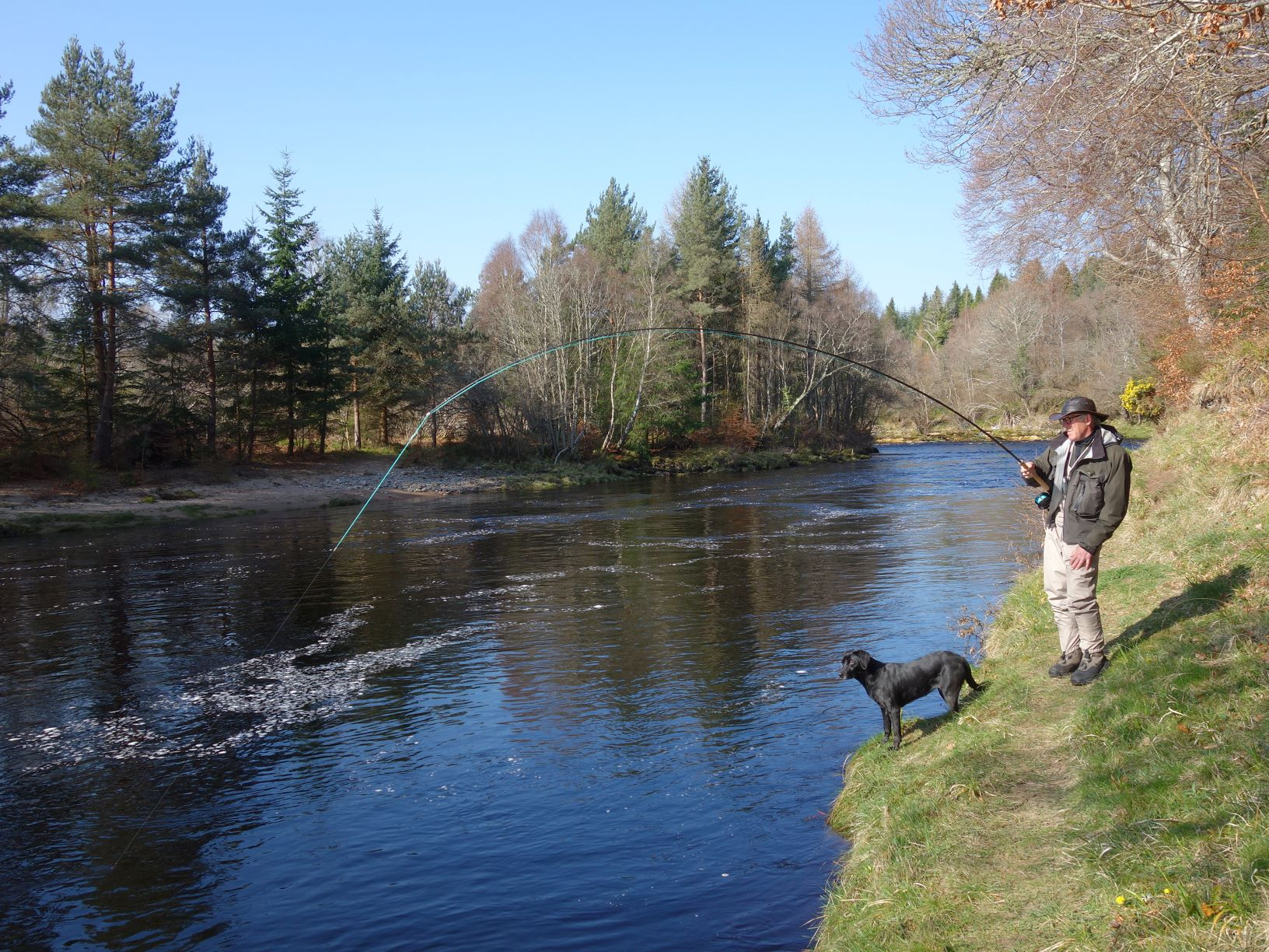 John Butcher hooks a big fish in Palamore Island Pool on Meads of St. John Beat, Darnaway, River Findhorn