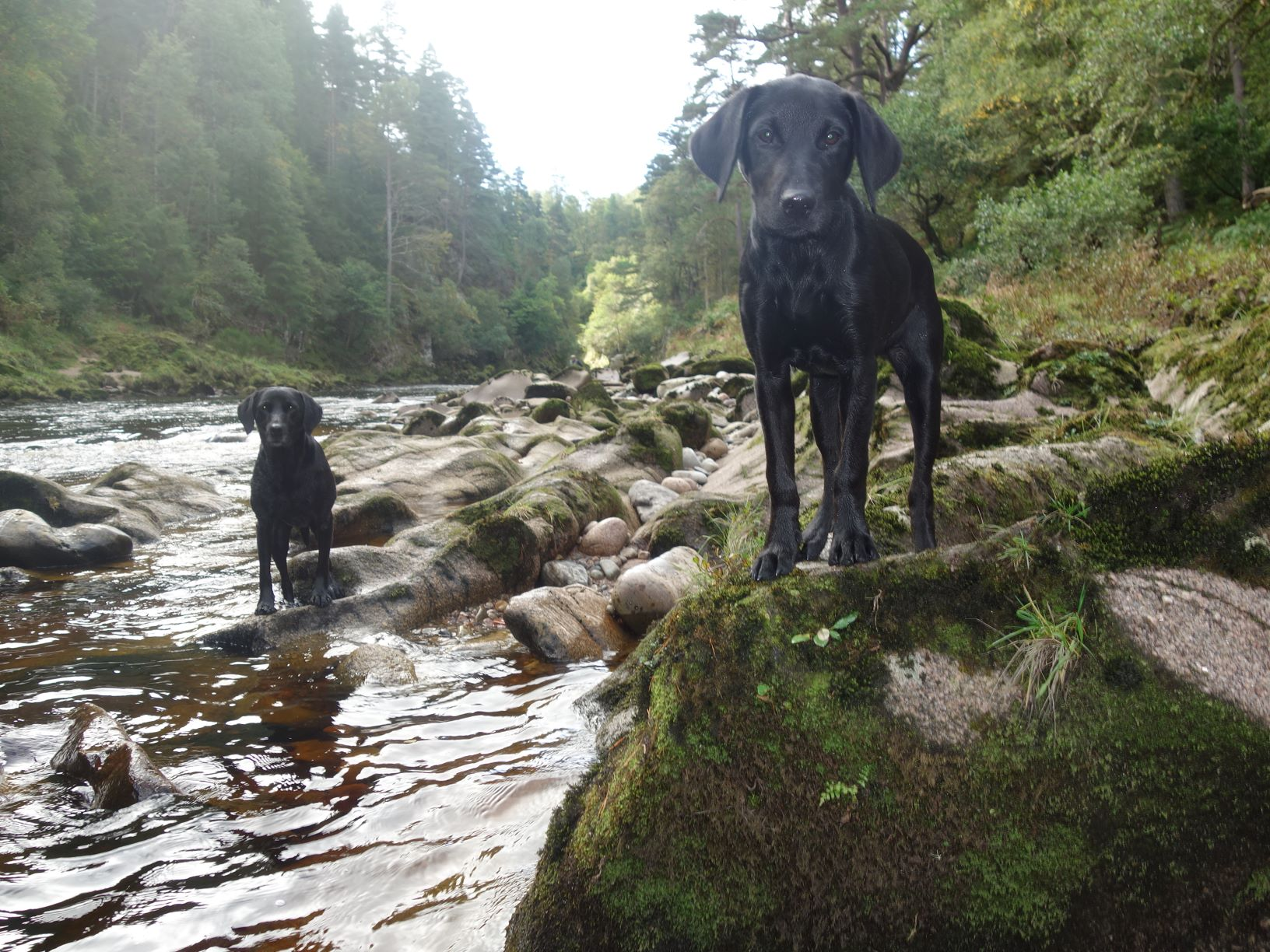 A glorious late Summer day up on Levrattich Beat, Glenferness, River Findhorn as Tulla and Sula keep an eye out for the fish!