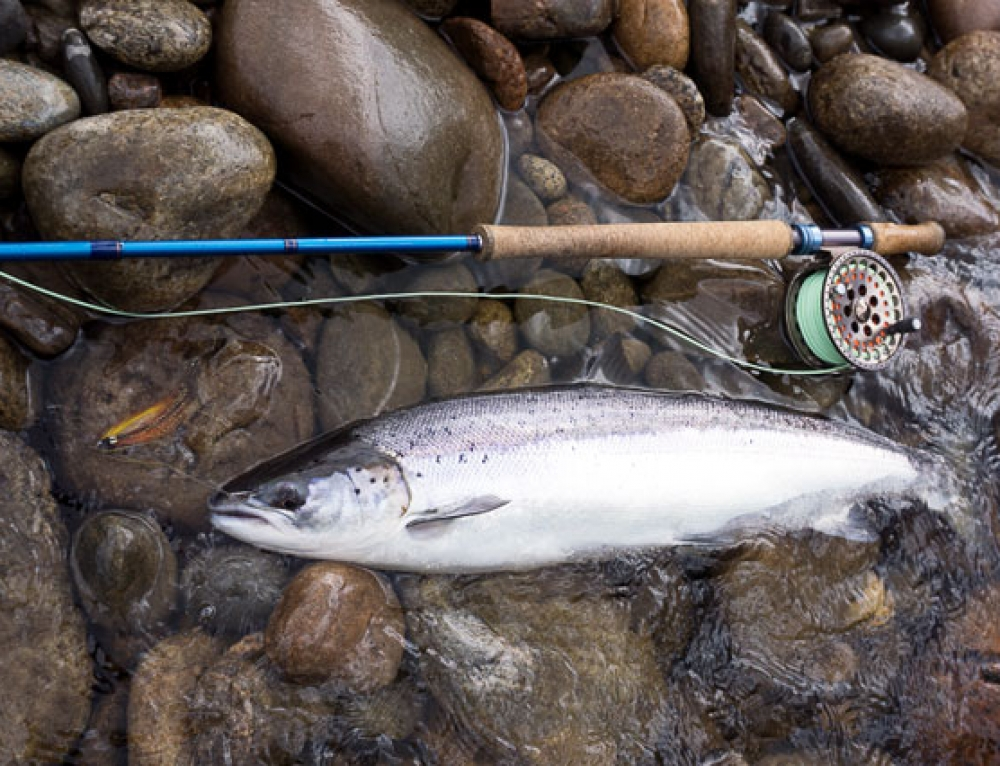 Salmon Fishing News Update, May, 2016