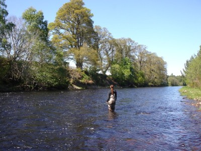 Good high fly water conditions on the Roan pool, Altyre Estate, River Findhorn.