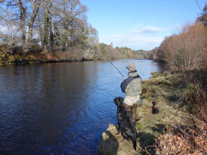 Playing a Spring fish on Altytre Estate River Findhorn