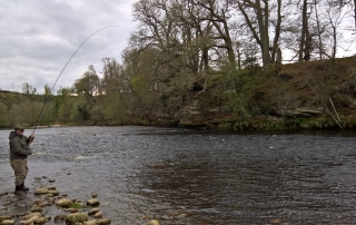Vermund hooks a fish in the top of Roan Pool, Altyre Estate, River Findhorn