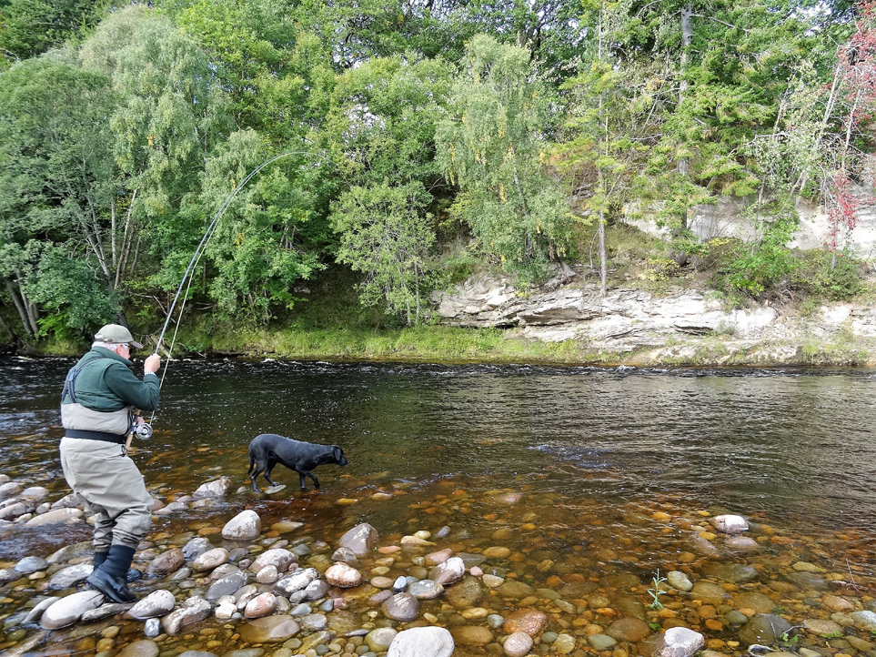 Nigel Warren-Thomas plays a strong fish in the Scur Pool on Altyre Estate, River Findhorn