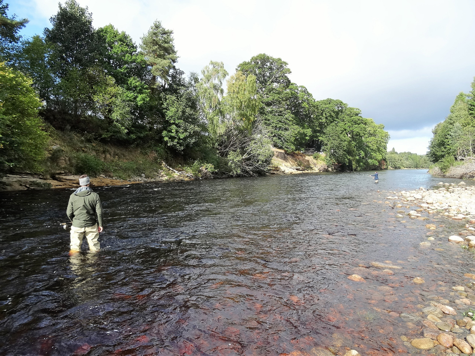 Jean-Francois Laroche from Canada casts a good line over the Roan Pool, just after losing his first salmon on Altyre Estate, River Findhorn.