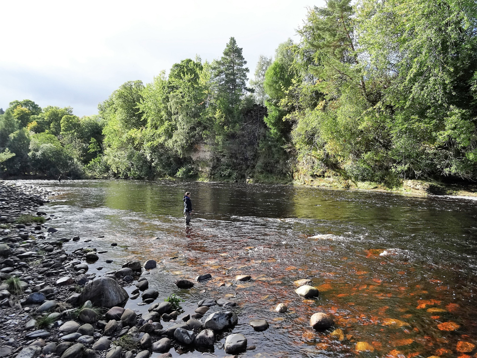 Casting a fly over Palamore Pool on Altyre Estate, River Findhorn in late September in perfect water conditions.