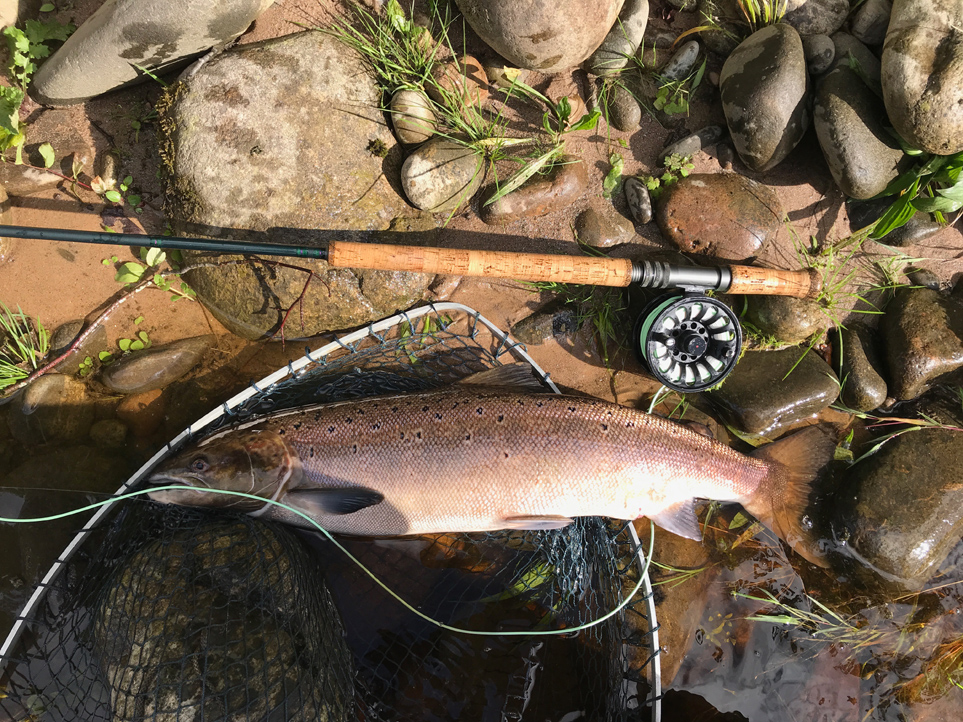 A fresh fish of around 5 lbs. for Robert Mull from Roan Pool on Altyre Estate, River Findhorn