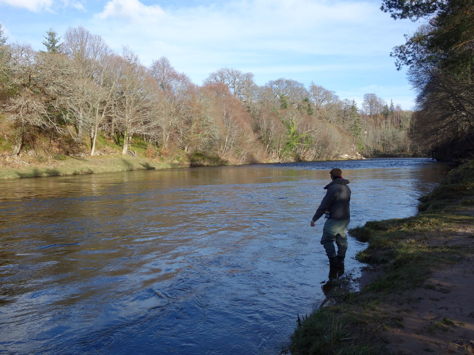 Casting a fly over Palamore Island in high water on Altyre Estate, River Findhorn