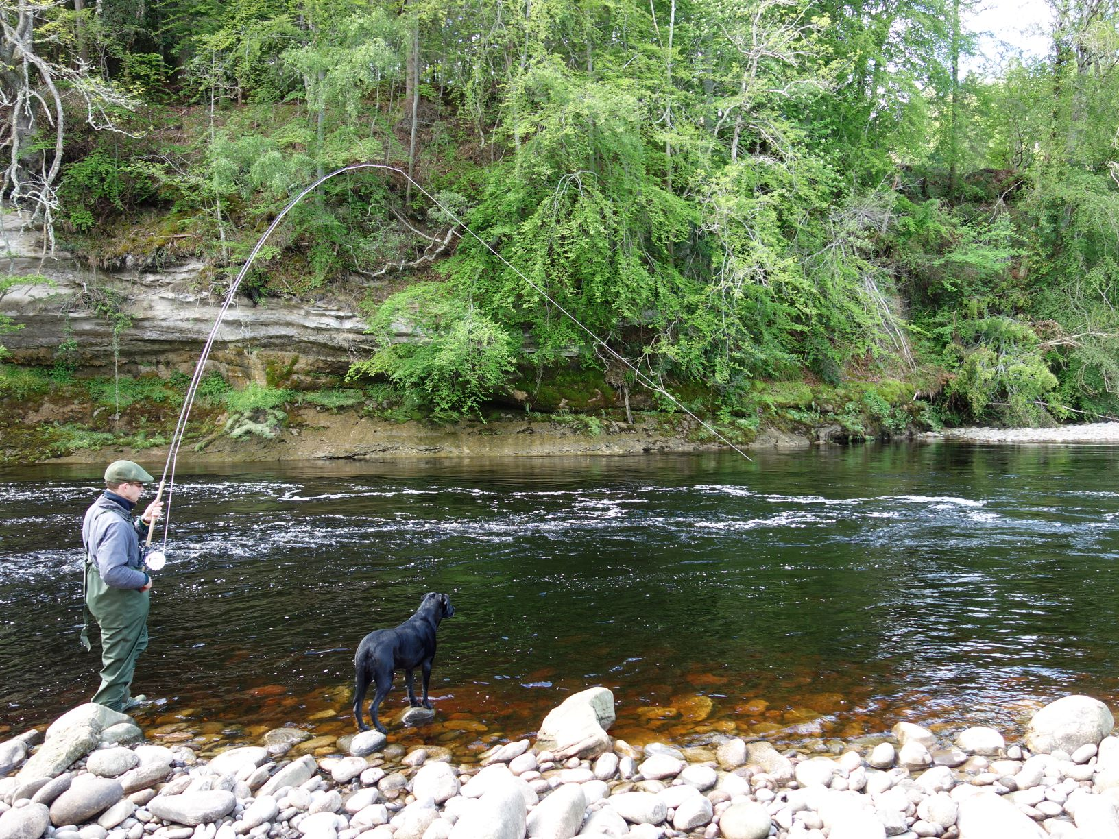 Fred Wheeler-Booth hooks and plays his second fish of the day in Soldier's Hole, Altyre Estate, River Findhorn